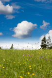 Spring on meadow Royalty Free Stock Photography