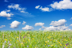 Spring on meadow Stock Photos