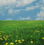 Spring meadow Royalty Free Stock Photography
