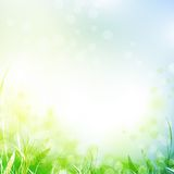 Spring meadow. With green grass over blue sky, copyspace Stock Image