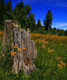 Spring Meadow 2. Wildflowers blanket meadow in rural Idaho spring Stock Photography
