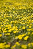 Spring meadow 2. Close-up of a spring meadow stock photos