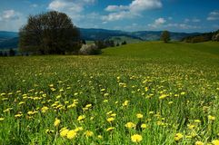 Spring meadow. Spring in bloom meadow trees Royalty Free Stock Image