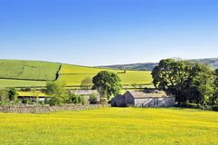 Spring Meadow. With daisies and Old farmhouse at the Yorkshire Dales (England Royalty Free Stock Photos