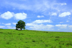 Spring meadow. Meadow in spring with green grass, tree and cheerful blue sky Stock Image
