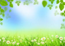 Free Spring Meadow Stock Photography - 23653882