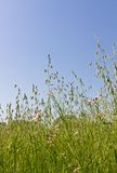 Spring meadow. This is a picture of a grassy plain of spring was taken in April Stock Images