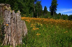 Spring Meadow. Wildflowers blanket meadow in rural Idaho spring Stock Photo