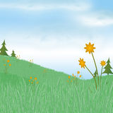 Spring meadow Royalty Free Stock Photos