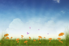 Spring meadow background Stock Image