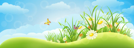 Spring meadow background. With grass, flowers and sky Stock Images