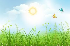 Spring meadow background. With white flowers and green grass