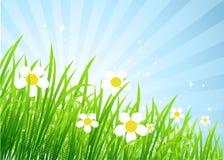 Spring meadow beautiful Stock Image
