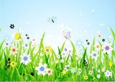Spring meadow beautiful Stock Photo