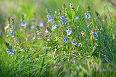 Spring in meadow Royalty Free Stock Photo