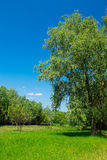 Spring meadow with big tree. And blue sky stock photos
