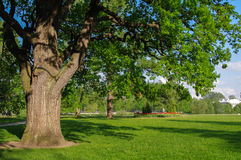 Spring meadow with big tree  fresh green leaves Stock Photos