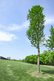 Spring meadow with big tree with green leaves Stock Photography