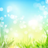 Spring meadow with blue sky. Spring meadow with green grass over blue sky, copyspace Stock Images