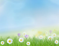 Spring meadow with blue sky. Royalty Free Stock Photos