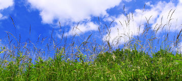 Spring meadow and blue sky.Klee flowers  meadow and blue sky. Royalty Free Stock Photography