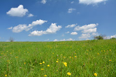 Spring meadow and blue sky. Landscape in Poland Royalty Free Stock Image
