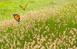 Spring meadow and butterflies Stock Photography