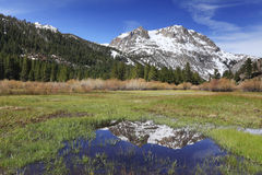 Spring meadow in California mountains royalty free stock images
