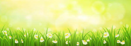 Spring meadow with chamomiles Royalty Free Stock Photography