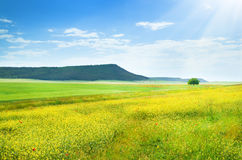 Spring meadow. Stock Photography