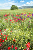 Spring meadow. Stock Images