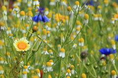 Spring meadow Stock Image