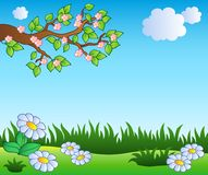 Spring meadow with daisies. Illustration Stock Image
