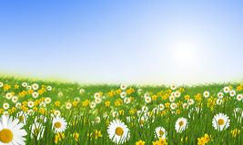 Spring meadow with daisies Stock Image