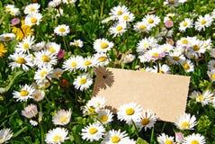Spring meadow Royalty Free Stock Photos