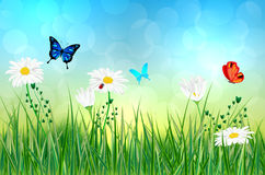 Spring meadow with daisy flowers and butterflies Stock Photo