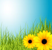 Spring meadow with flowers vector illustration