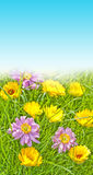 Spring meadow with flowers Stock Image