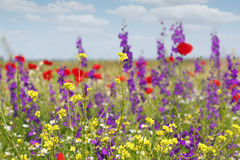Spring meadow with flowers Stock Photos