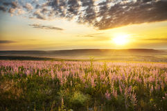 Spring meadow of flowers. Royalty Free Stock Image