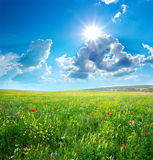 Spring meadow of flowers Stock Photography