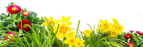 Spring meadow, flowers, isolated Stock Image