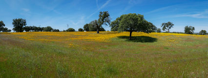 Spring Meadow Flowers and Trees Panorama - Spain Stock Photo