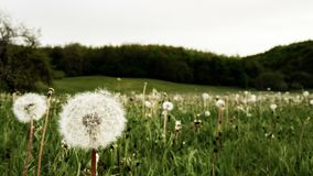 Spring meadow full of flowers royalty free stock photos