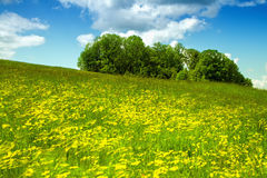 Spring meadow full of flowers in the wind Royalty Free Stock Photography