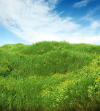 Spring meadow full of grass and flowers Royalty Free Stock Photo