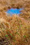 Spring meadow with green bush and blue puddle. Stock Image