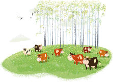 Spring meadow. Herd of cows grazing on meadow on birches background Stock Photo