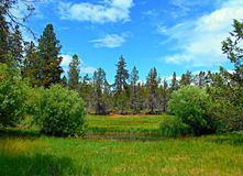 Spring in the Meadow. Hindman Spring in the Camp Polk Preserve - near Sisters, OR Royalty Free Stock Photography