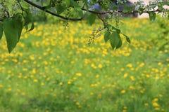Spring_ meadow_ jpg Stock Afbeelding